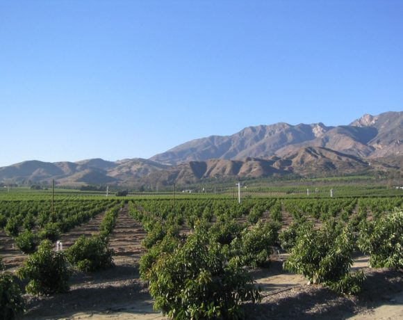 Conserving Ventura County, One Ranch at a Time