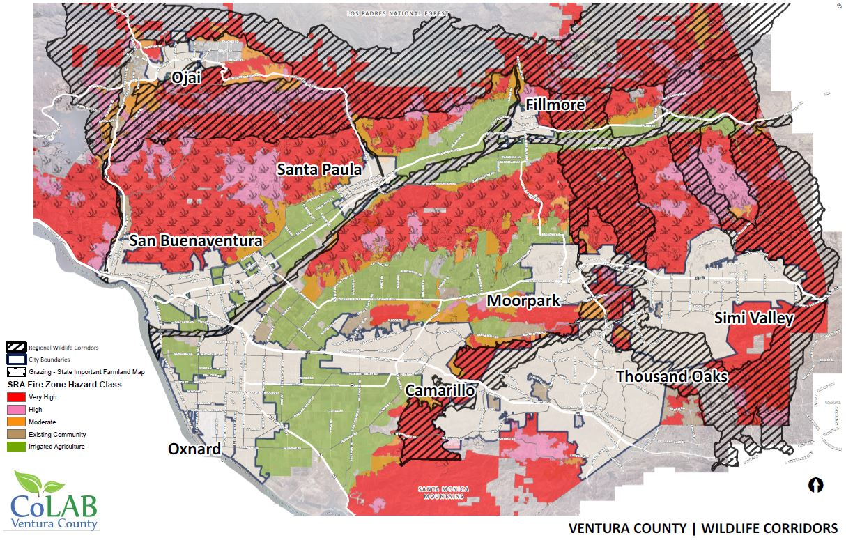 Thomas Fire Highlights Risk Of Wildlife Corridor Restrictions Colab Vc